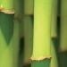 Bamboo Duvet
