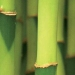 Edredón Bambú
